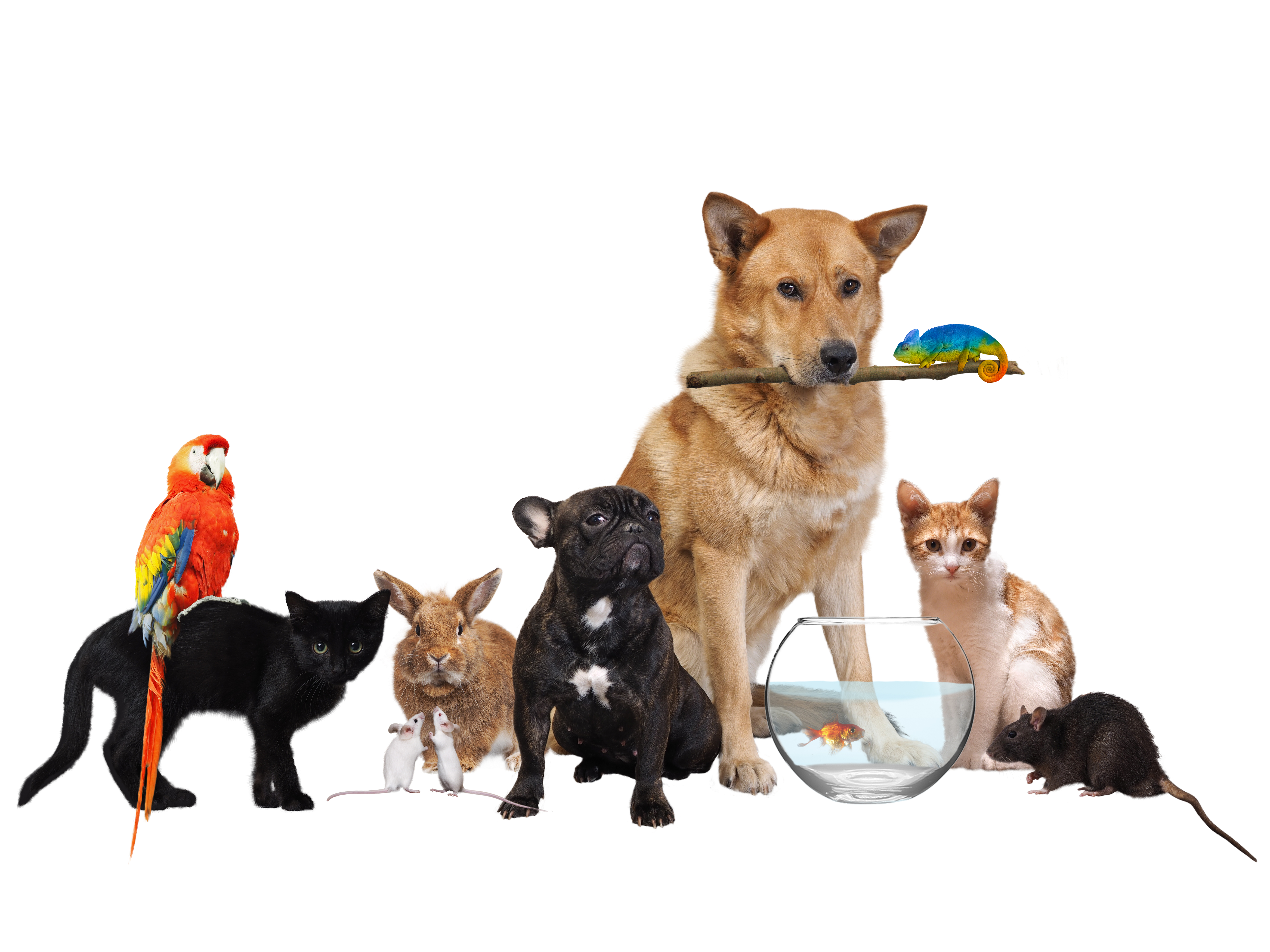 Diverse group of pets on a white background