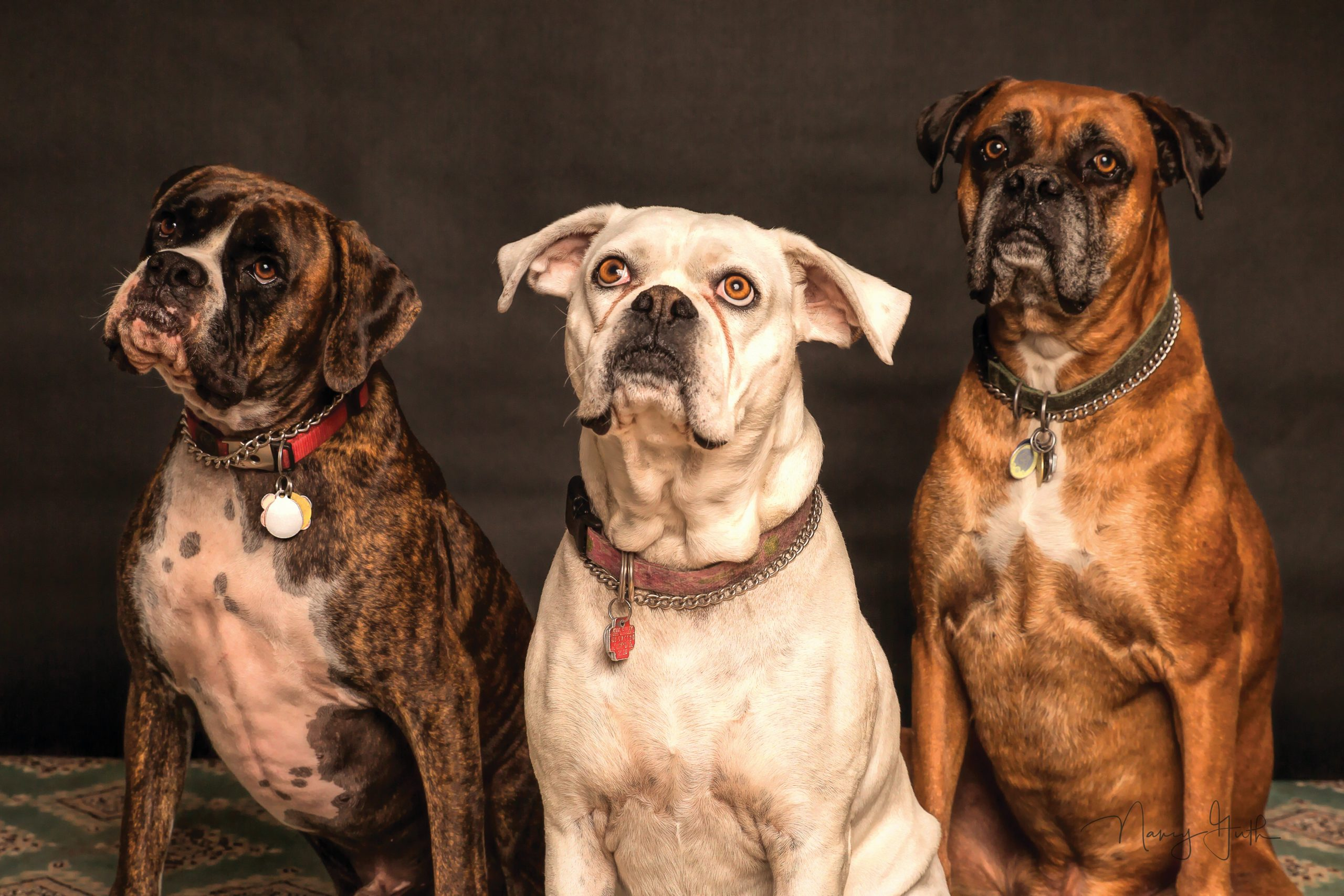 3 dogs looking up